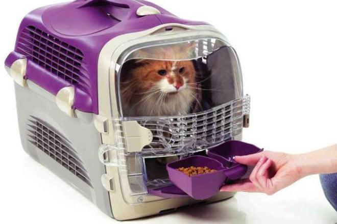 Лучшие переноски для кошки