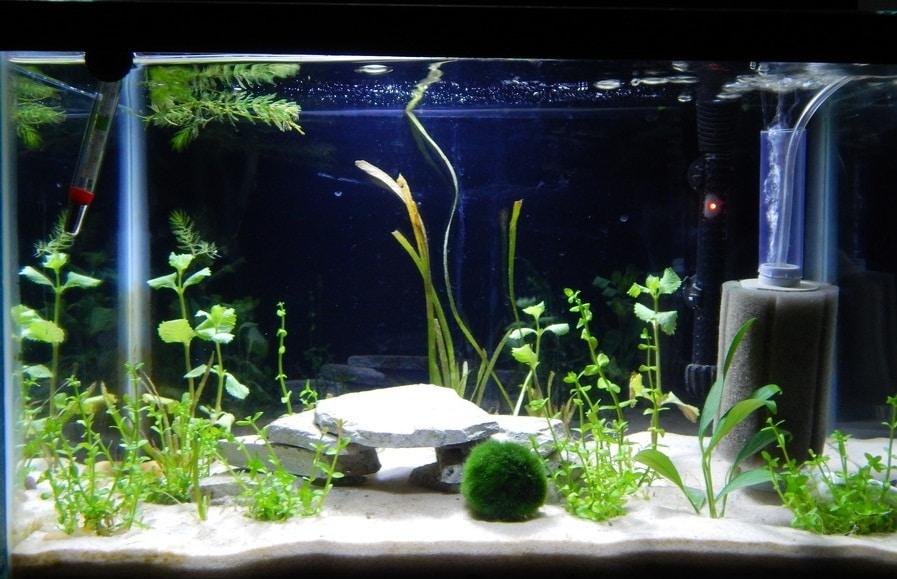 Правильный выбор фильтра для аквариума – основное условие для содержания рыб
