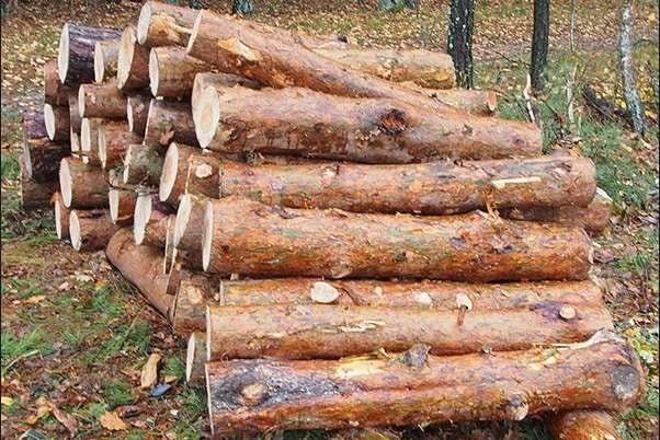 Хвойные дрова