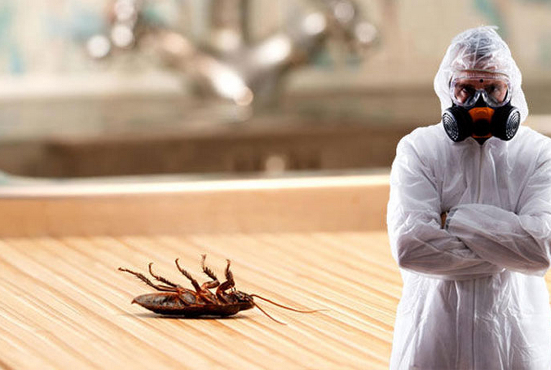 картинки борьбы с тараканами родня девушки занимается